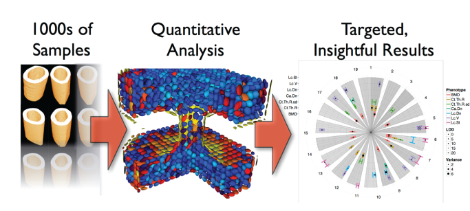 4Quant: Turning Images into Information
